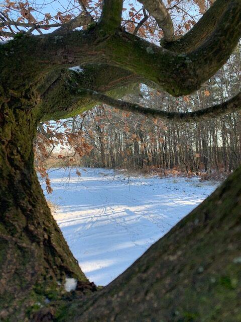 Wel leuk: een hartje in de bossen: met zicht op de weidsheid erachter.